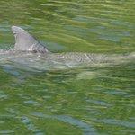 Zelfs een dolfijn!