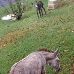 donkey right off our patio. deer are roaming too