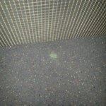 "Dirty ""green stuff"" stuck in the carpet."