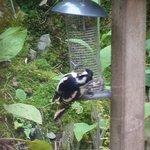 Breakfast with a Woodpecker