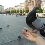 The Pigeons come to eat out of your hand :-)