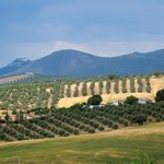The beautiful Andalucian setting with the Cortijos and stables nestling in the mid-ground