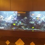 Cool fish tank inside