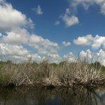 Beautiful Everglades