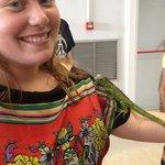 Baby iguana!