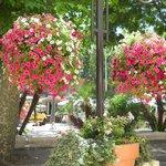 lovely flower pots in the patio/garden
