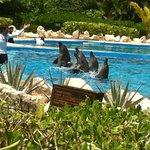 Dolphinarium et Tulum