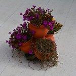 Flowers on terrace
