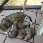 Gatitos en la tienda