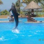 Bellos los delfines.. no se pierdan el show de las 11:30 am