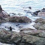 Seal Pups playing at Ohau