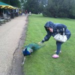 Peacock in castle garden