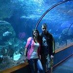 oceanarium w loro parque