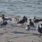 birds eating fish