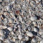 shells at the beach