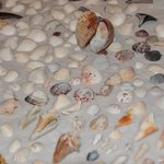 Our shell collection