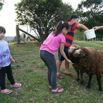 Kids love sheep feeding