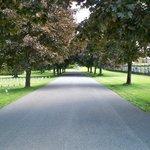 Trees lining walkway
