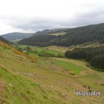sheep fields and gorse throughout drive