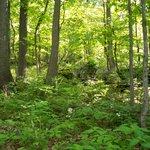 Woods at KOA