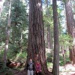 Trevor & Carole standing near a red cedar tree?
