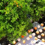 valencia orange trees and restaurant below our room