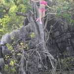 Cliff Jumping off the Tree