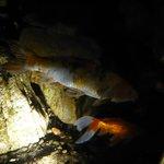 Fische im Botanischen Garten - direkt hinter einer sehr sauberen Glasscheibe!