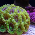 Very healthy corals