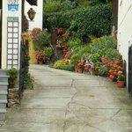 Цветы во дворе дома