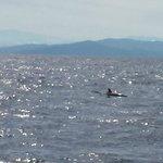 Cano Island - dolphins