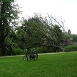 In Vondel Park