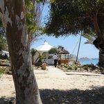 ook aan het strand mooie bomen