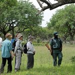 Walking safaris with Ghost Mountain Safaris