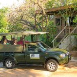 Big 5 Safaris from Nandina Guest House
