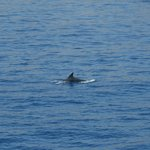 Dolphin on a boat trip to Chalki (Booked via Thomson Rep)