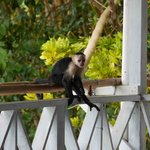 monkey at the porch