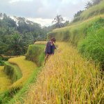 Take a stroll in lovely Rice Farm