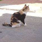 Le petit chat très mignon fréquentant notre environnement