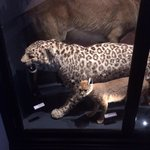 Some of the taxidermy animals
