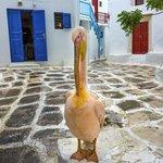 Pedro Le Pelican .....