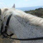my loyal horse Carinyoso