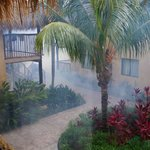 fumigating for mosquitos