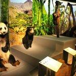 Временная выставка Медведи