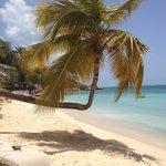 Famous Hugo Palm tree