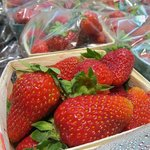 Organic strawberries from Harlow Farm.