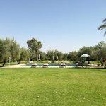 piscine dans le jardin