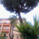 Около отеля растет хвойное деревце
