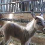 New baby donkey