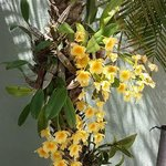 Orchids on a palm